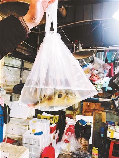 海鲜市场违规私卖活河豚:10分钟可买到,库房不