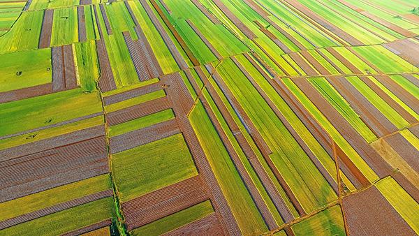 河南官方勒紧耕地红线,到2020年不少于1.2亿亩