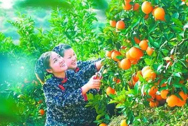 赣州8个特色小镇获省里重点支持:每个每年奖