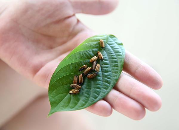 放飞萤火虫遭质疑后,西安曲江农博园活动取消放飞环节 - 梅思特 - 你拥有很多,而我,只有你。。。