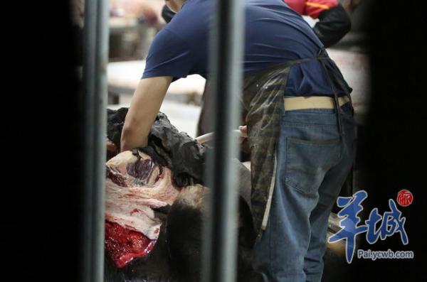 视频丨注水牛羊肉从东莞视频正规屠宰场流出,窦炎肛多家图片
