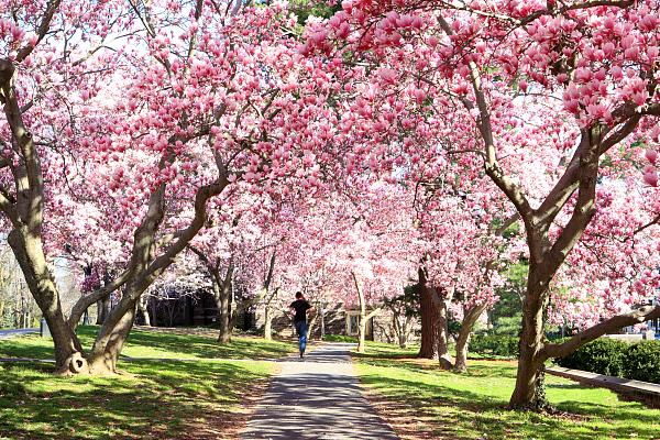 古诗文中的春分节气