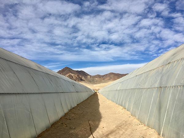 """西藏阿里的""""菜篮子""""工程:普兰试点全区推广,三年节约千万"""