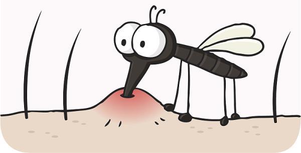 被蚊子咬了,为啥会鼓了大包中间还长水疱?