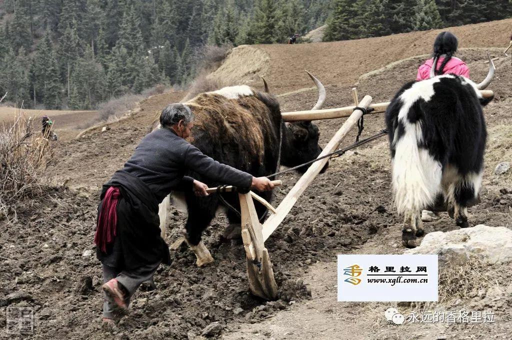 传统耕作方式