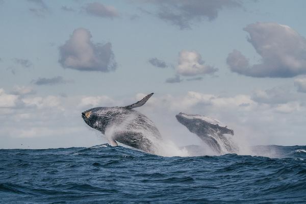 追沙丁鱼的摄影师宋刚:海底的动物大迁徙更惊心动魄